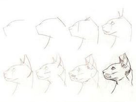 各种形态猎豹铅笔画画法教程