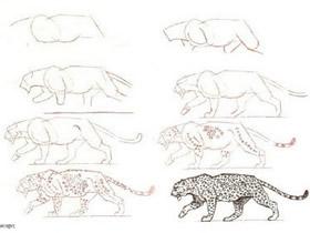 不同形态猎豹铅笔画画法教程