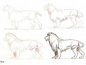 站立的狮子素描铅笔画画法教程