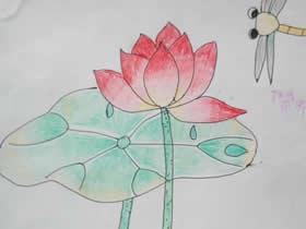 美丽的蜻蜓与荷花蜡笔画作品图片