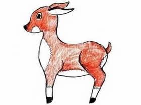 彩色的小鹿铅笔简笔画画法图片步骤