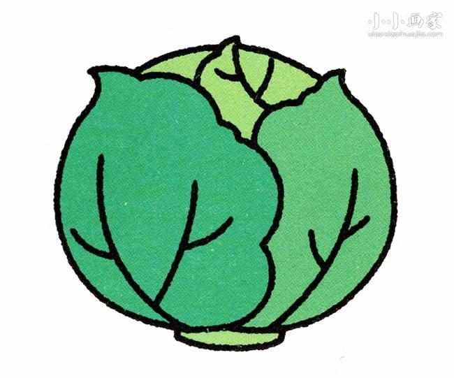 卷心菜简笔画画法图片步骤