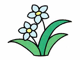 彩色水仙花简笔画画法图片步骤