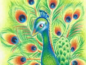 绿色孔雀蜡笔画作品图片
