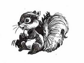 小松鼠铅笔画画法教程