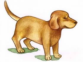 小狗狗铅笔画画法教程