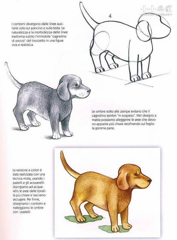 小狗狗铅笔画画法教程- www.xiaoxiaohuajia.com