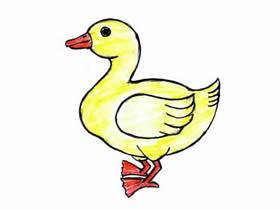 鸭子铅笔画画法教程