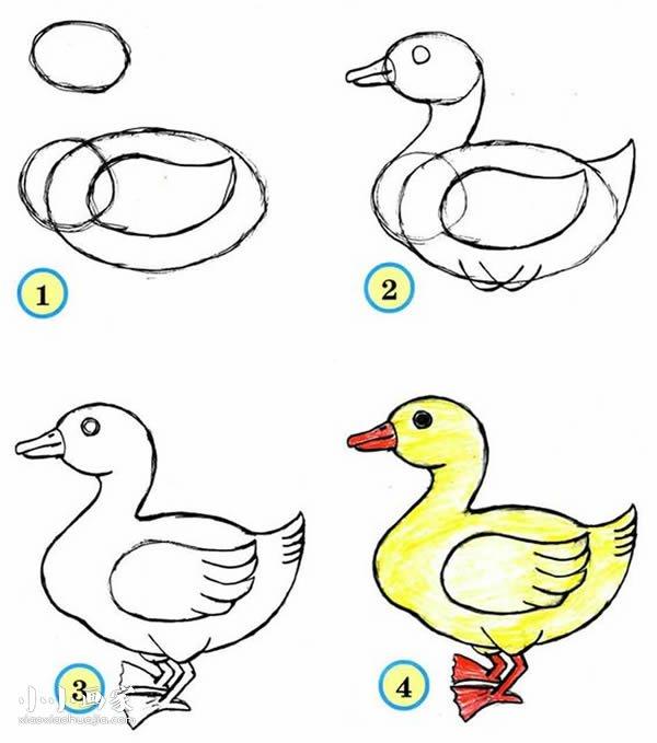 鸭子铅笔画画法教程- www.xiaoxiaohuajia.com