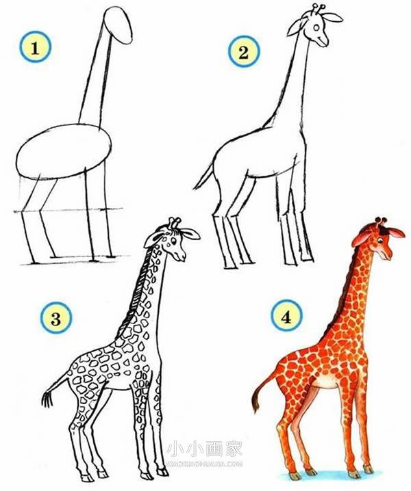 长颈鹿铅笔画画法教程- www.xiaoxiaohuajia.com