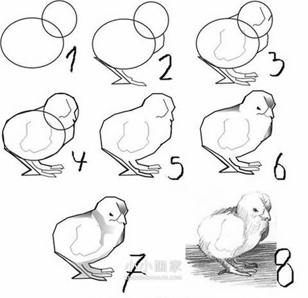 小鸡铅笔画画法教程- www.xiaoxiaohuajia.com
