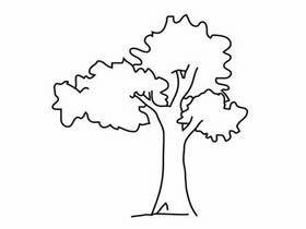 简单大树铅笔画画法教程