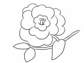 黑白山茶花简笔画画法图片步骤