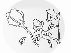 简单玫瑰花简笔画画法图片步骤