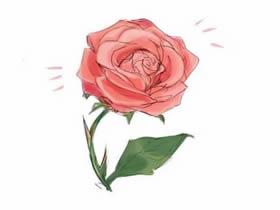 美丽玫瑰花铅笔画画法教程