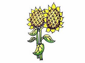 两棵向日葵简笔画画法图片步骤