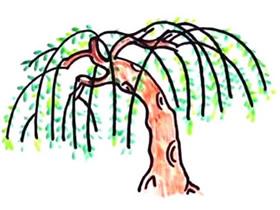 春天柳树简笔画画法图片步骤