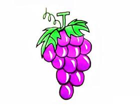 一串葡萄简笔画画法图片步骤
