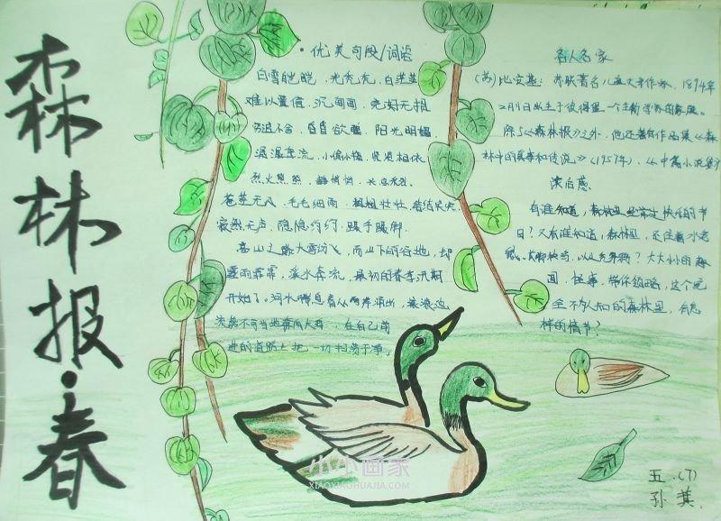 《森林报》手抄报简单又漂亮一等奖五年级- www.xiaoxiaohuajia.com