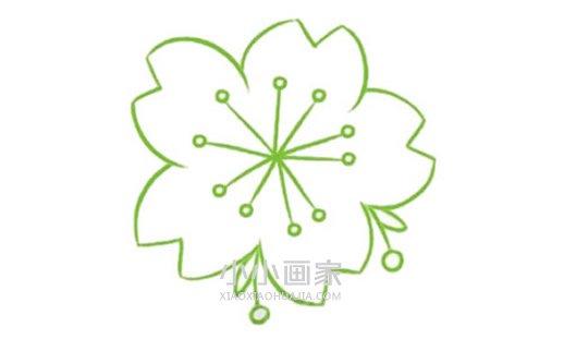 一朵樱花简笔画画法图片步骤- www.xiaoxiaohuajia.com
