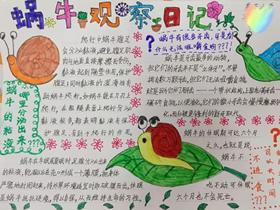 蜗牛观察日记手抄报怎么做图片三年级