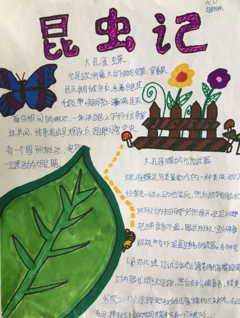 昆虫观察日记手抄报图片六年级- www.xiaoxiaohuajia.com