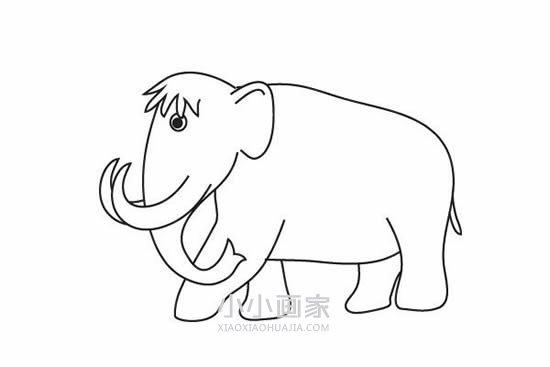 猛犸象简笔画画法图片步骤- www.xiaoxiaohuajia.com