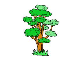 彩色柞树简笔画画法图片步骤