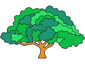 茂盛大树简笔画画法图片步骤