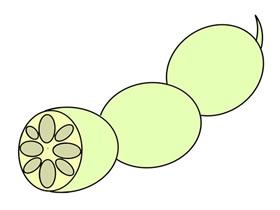 莲藕怎么画简笔画简单